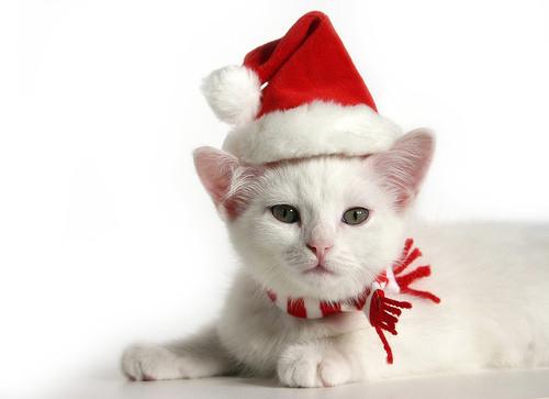Kat-Kerst-Seizoensartikelen